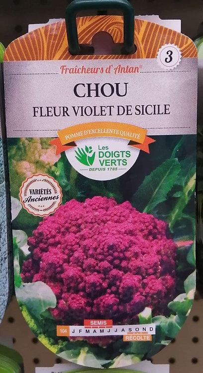 Chou fleur violet de Sicile n°3
