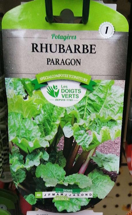Rhubarbe Paragon n°1