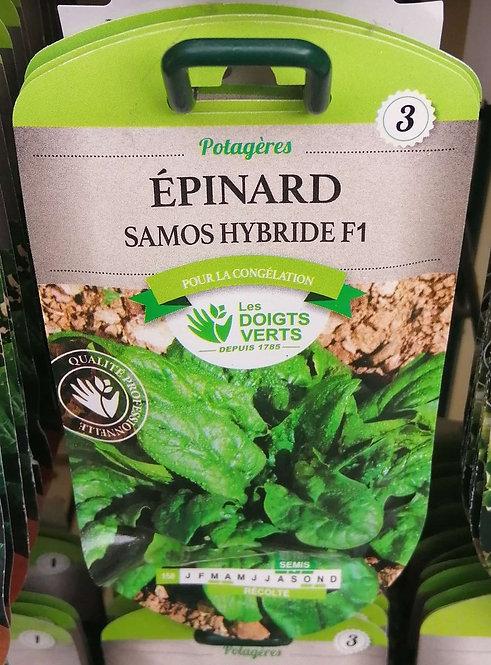 Epinard Samos hyb F1 n°3