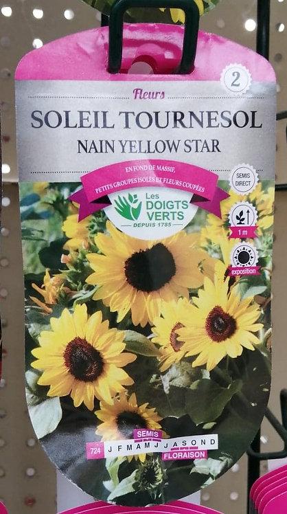 Soleil Tournesol nain yellow star n°2