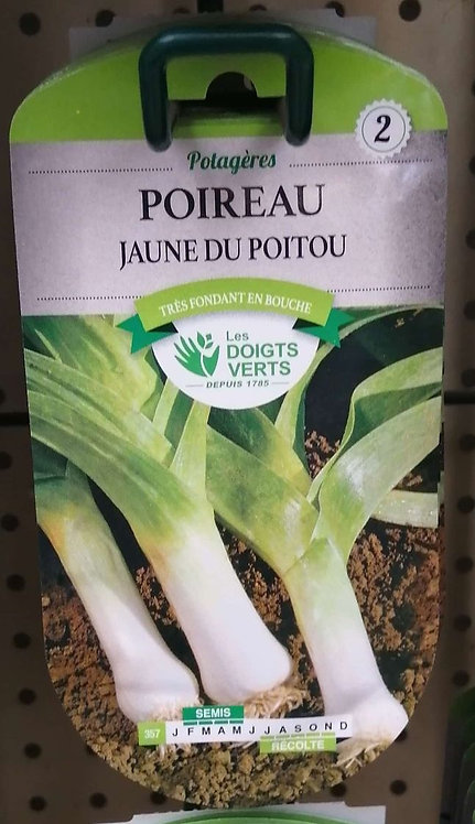 Poireau jaune du Poitou n°2