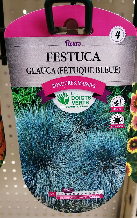 Festuca glauca (fétuqye bleue) n°4