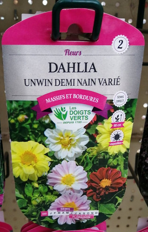 Dahlia unwin demi nain varié n°2