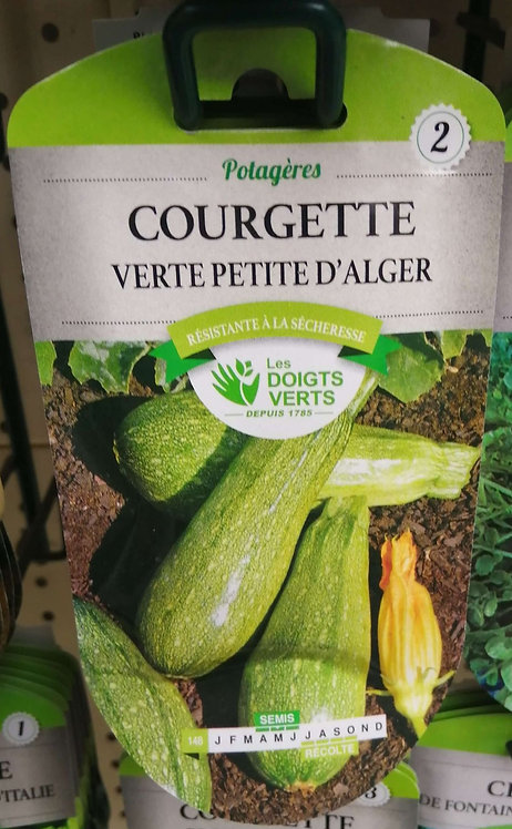 Courgette verte petite d'Alger n°2