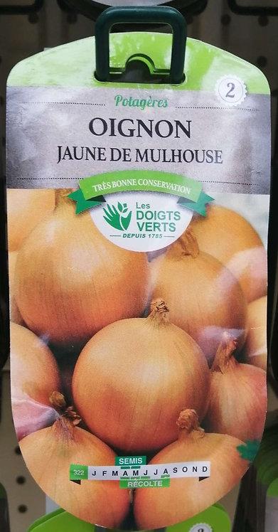 Oignon jaune de Mulhouse n°2
