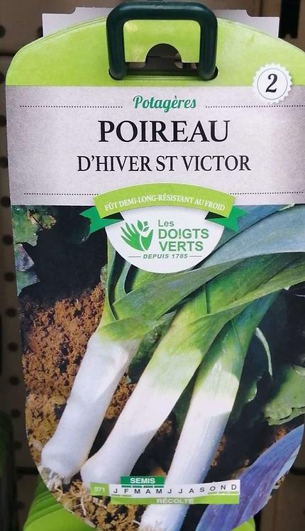 Poireau d'hiver St Victor n°2