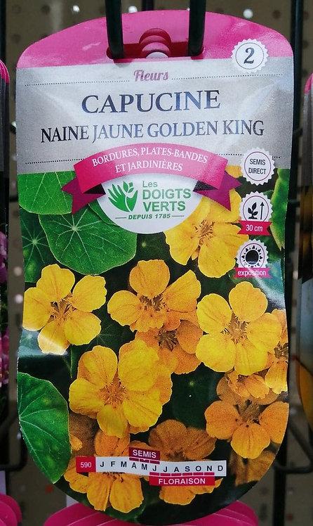 Capucine naine jaune golden king n°2