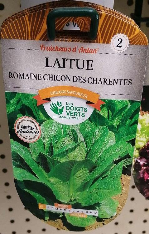 Laitue romaine chicon des Charentes n°2
