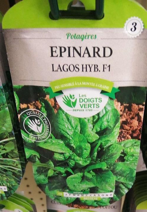 Epinard Lagos hyb F1 n°3