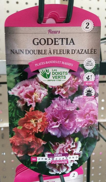 Godetia nain double à fleur d'azalée n°2