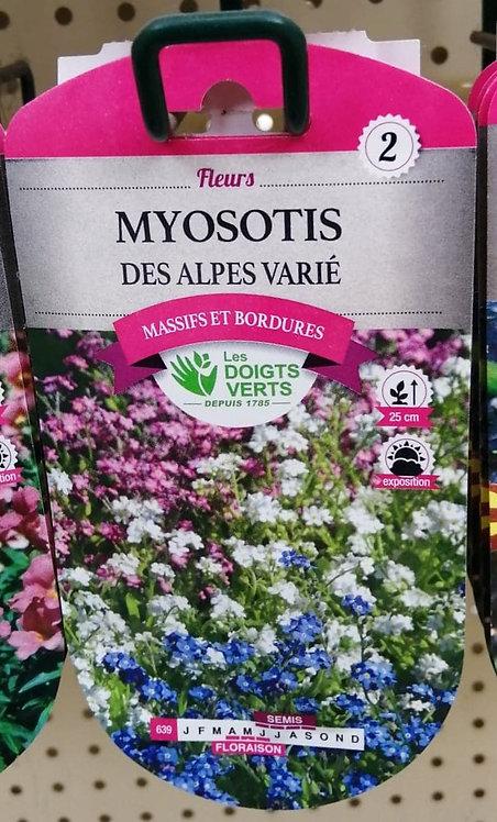 Myosotis des Alpes varié n°2