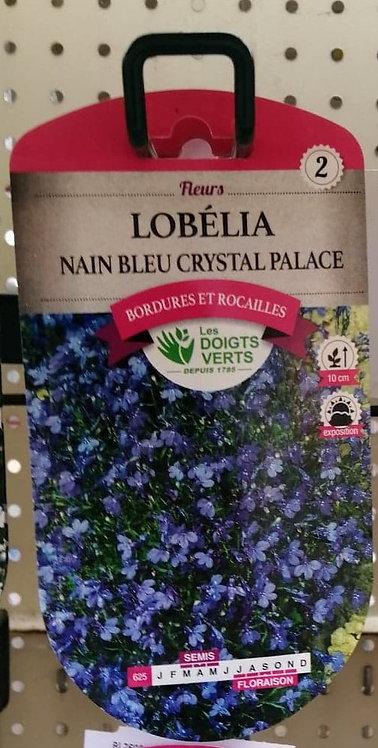 Lobélia nain bleu crystal palace n°2