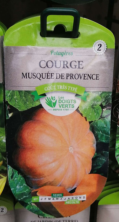 Courge musquée de Provence n°2
