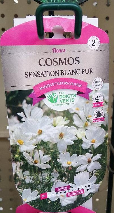 Cosmos sensation blanc pur n°2