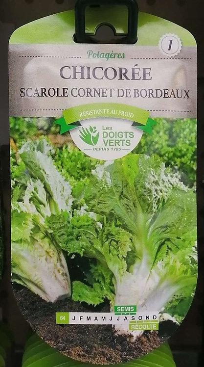 Chicorée scarole cornet de Bordeaux n°1