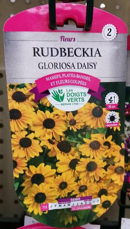 Rudbeckia Gloriosa daisy n°2