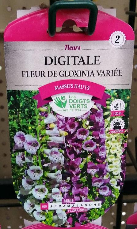 Digital fleur de gloxinia variée n°2