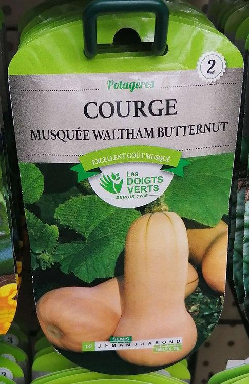 Courge musquée waltham butternut n°2