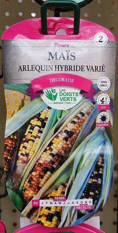 Maïs arlequin hyb varié n°2