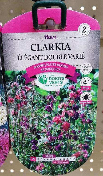 Clarkia élégant double varié n°2