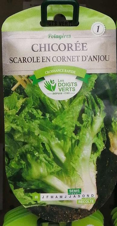 Chicorée scarole en cornet d'Anjou n°1