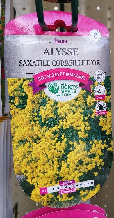 Alysse Saxatile Corbeille d'Or n°2