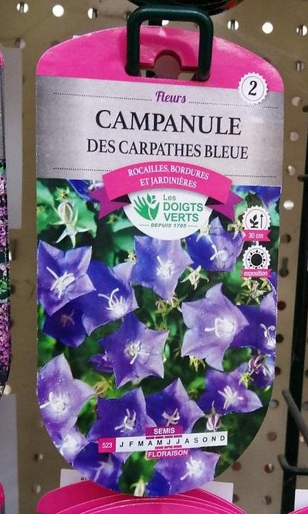 Campanule des Carpathes bleue n°2