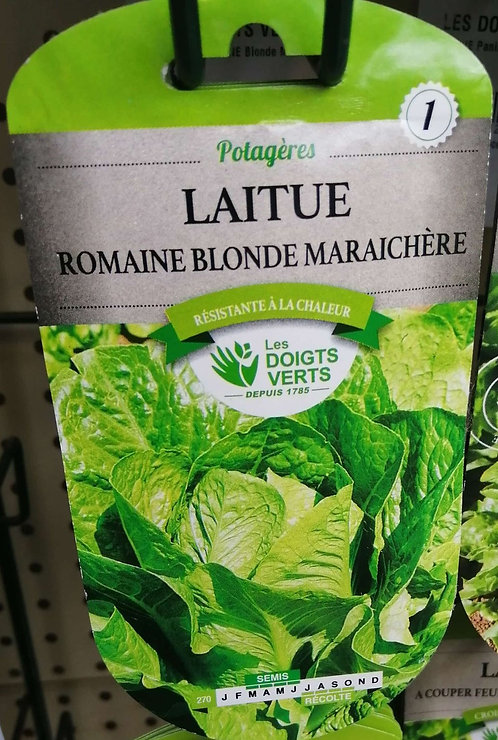 Laitue romaine blonde maraichère n°1