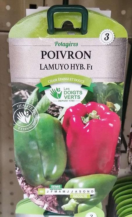 Poivron lamuyo hyb F1 n°3