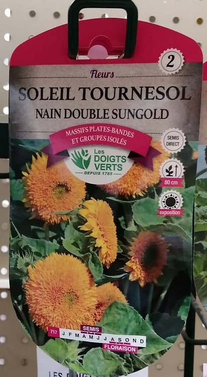 Soleil tournesol nain double sungold n°2