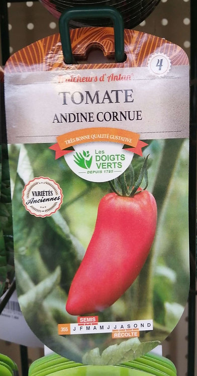 Tomate andine cornue n°4