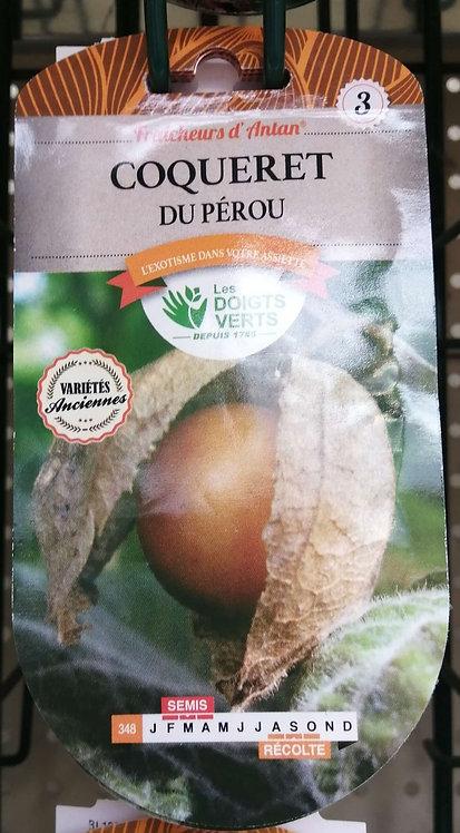 Coqueret du Pérou n°3