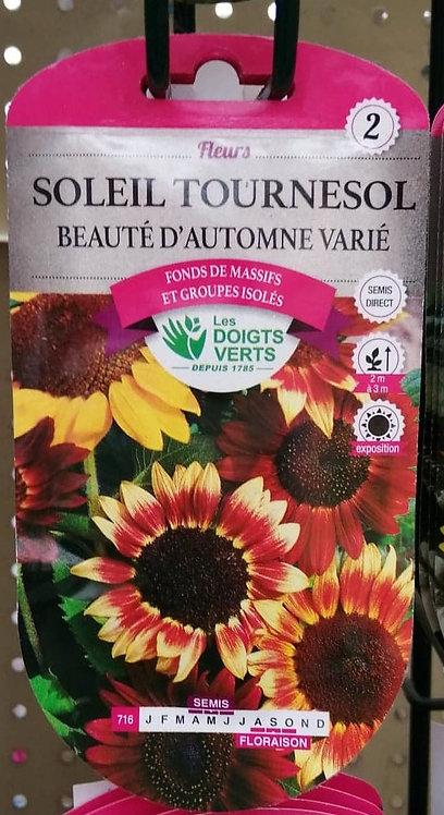 Soleil tournesol beauté d'automne varié n°2