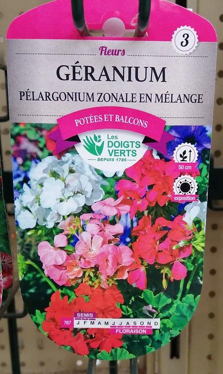 Géranium pélargonium zonale en mélange n°3