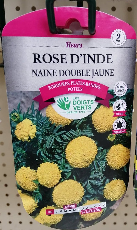 Rose d'Inde naine double jaune n°2