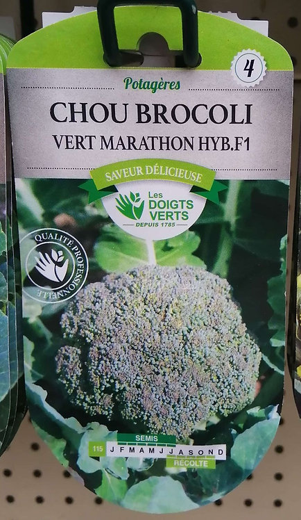 Chou brocoli vert marathon hyb F1 n°4