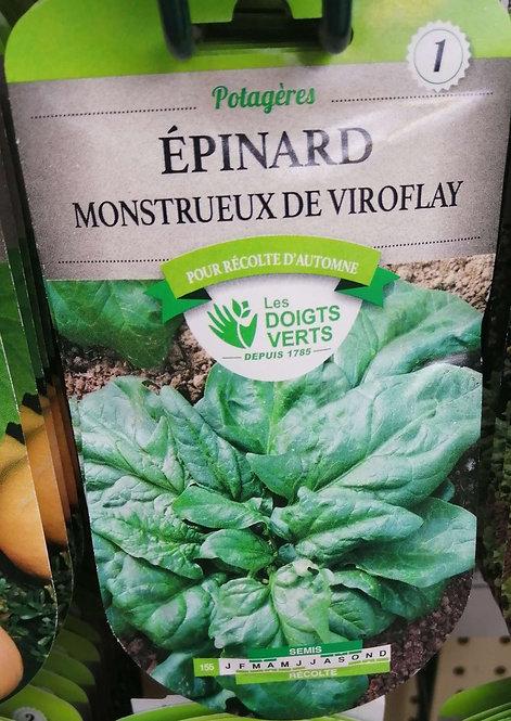 Epinard monstrueux de Viroflay n°1