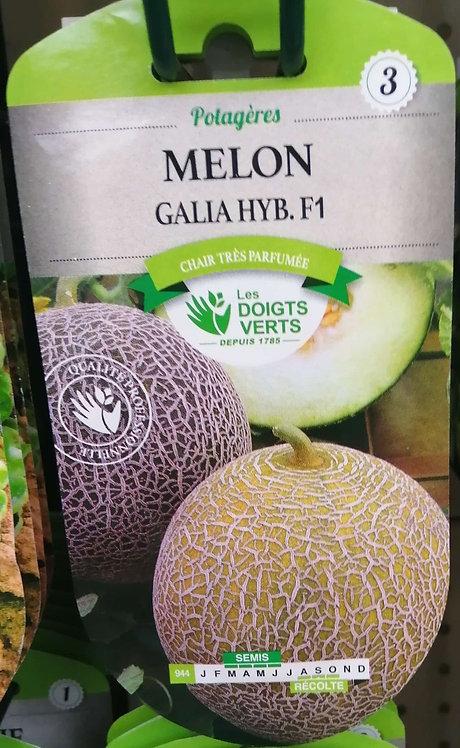 Melon galia hyb F1 n°3