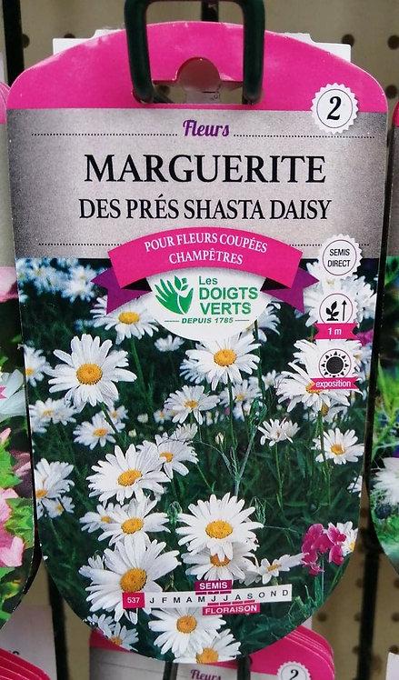 Marguerite des prés shasta daisy n°2