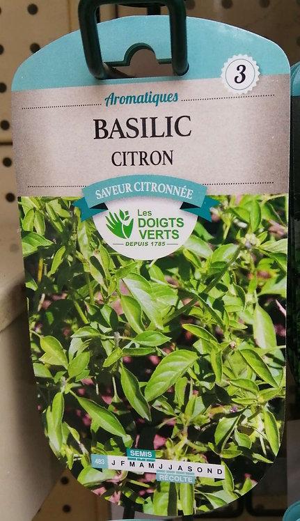 Basilic citron n°3