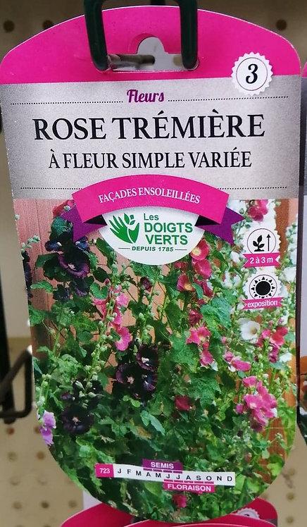 Rose trémière à fleur simple variée n°3