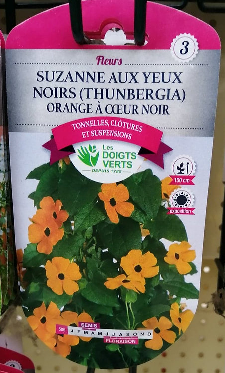 Suzanne aux yeux noirs Thunbergia orange à coeur noir n°3