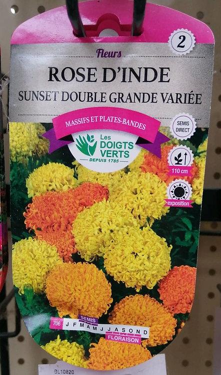 Rose d'Inde sunset double grande variée n°2