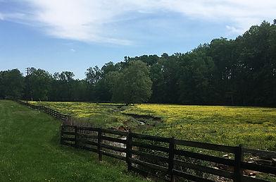 Warren County pasture 2_edited.jpg