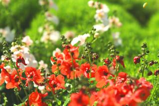 Your March Garden