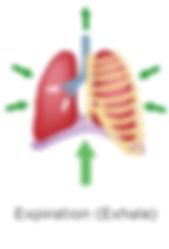 belly-breathing-diaphragm-functions_edit