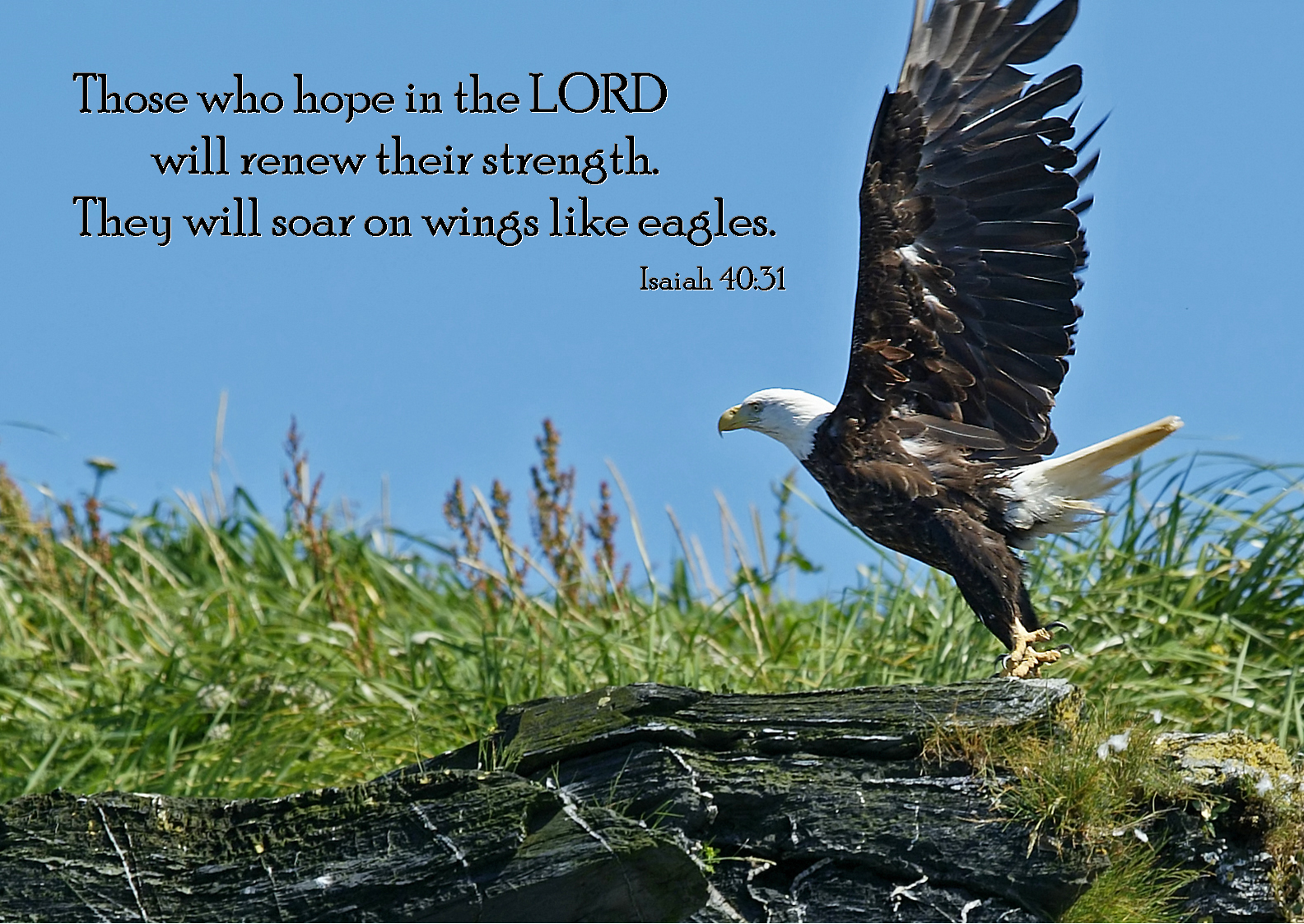 11 November - Eagle (Isaiah 40-31).png