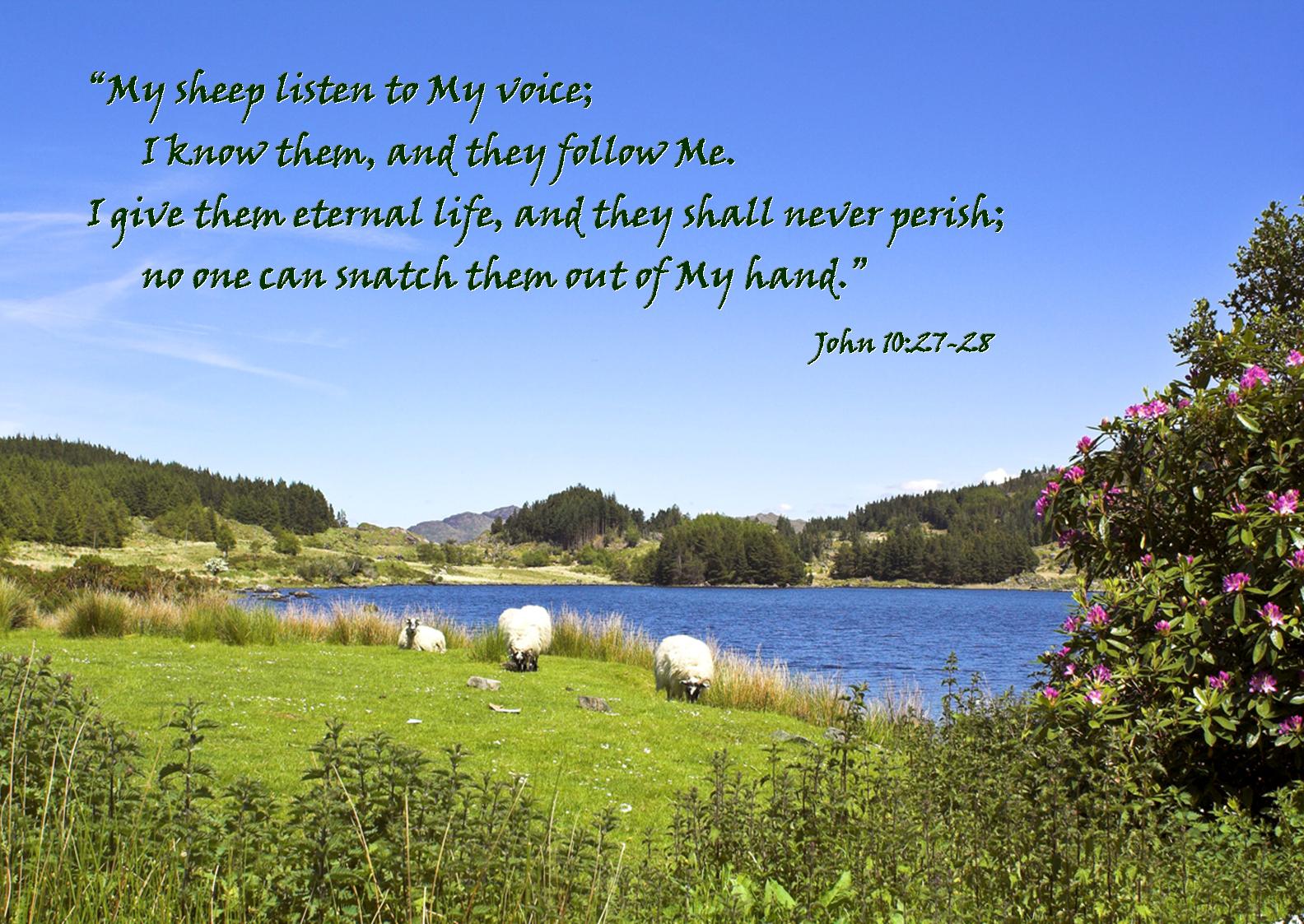 02 February - Sheep (John 10-27-28).png