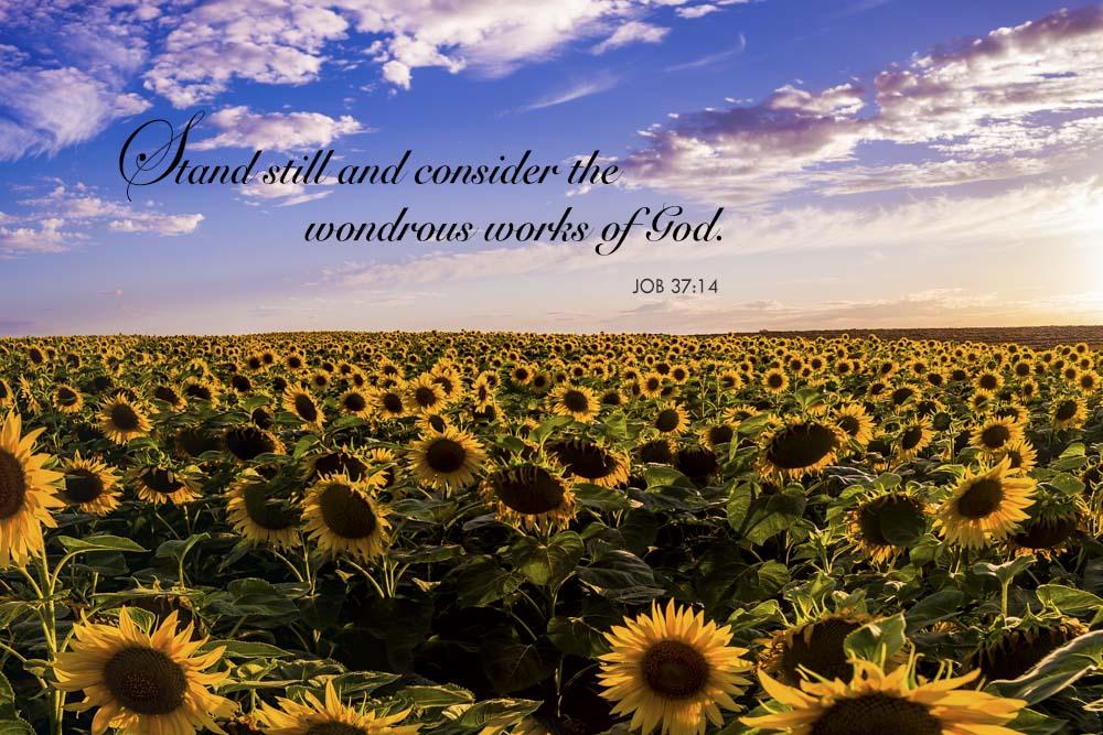 SunflowerPsalm.jpg