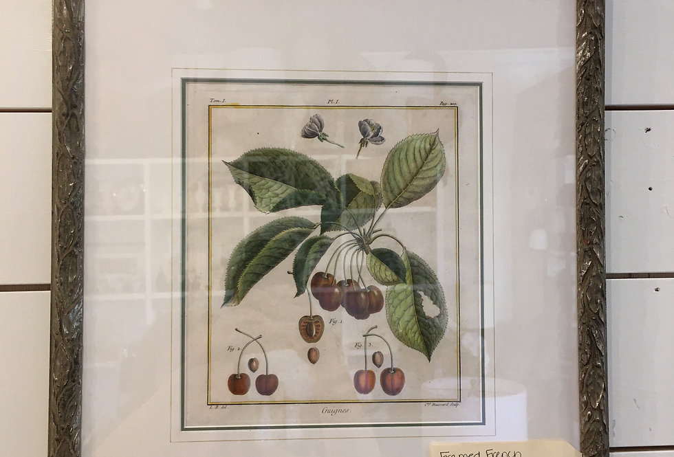 Cherry Botanical Plate in Frame